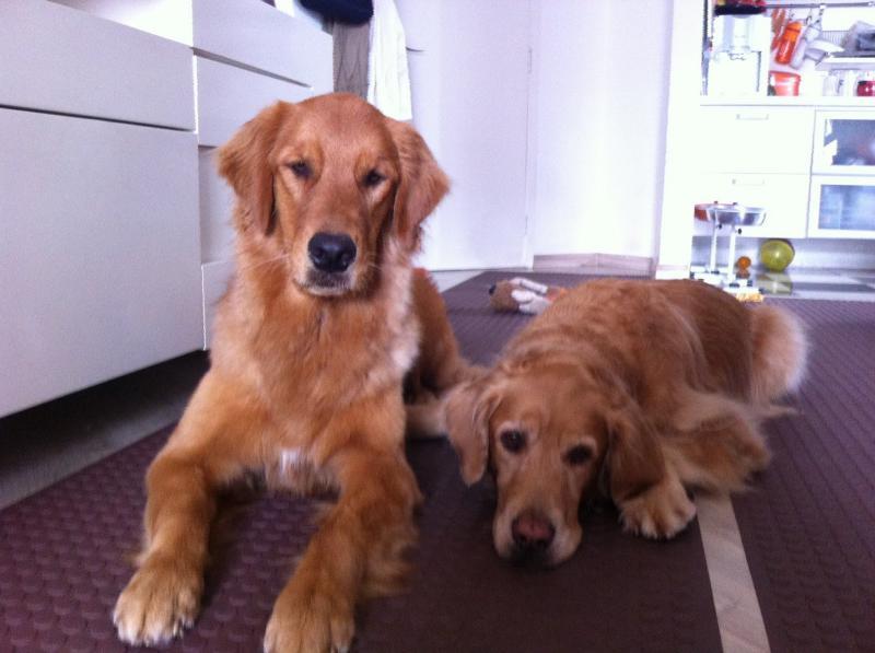 Piso antiderrapante para cachorro