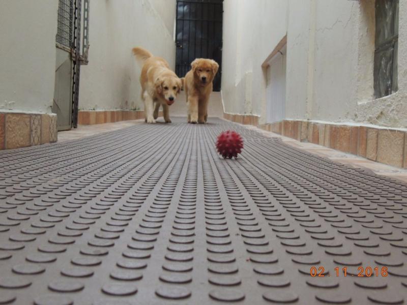 Piso Antiderrapante Para Cachorro S 227 O Miguel Borrachas